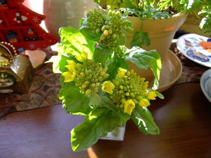 aa菜の花aa.jpg
