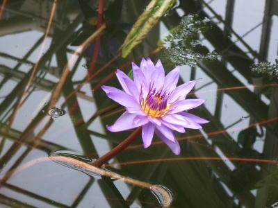 aaa植物園ad1.jpg