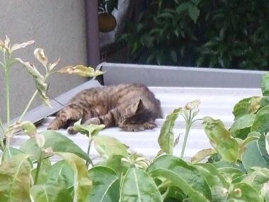 aaa母猫ab1.jpg